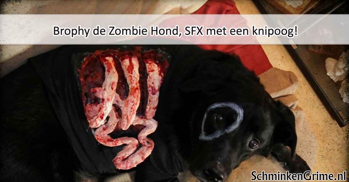 Brophy de Zombie Hond