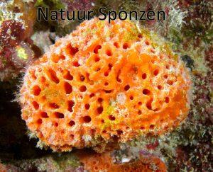 Lesson 2 Sponges